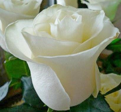 Варенье из лепестков роз (рецепты)