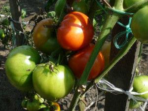 Рецепты: варенье из зеленых помидор