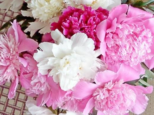 цветы пионы, посадки - фото, букет цветов