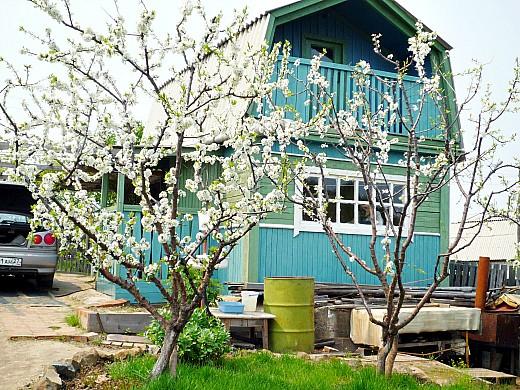 борьба с вредителями сада и огорода только байкалом и карбофосом - цветение сада