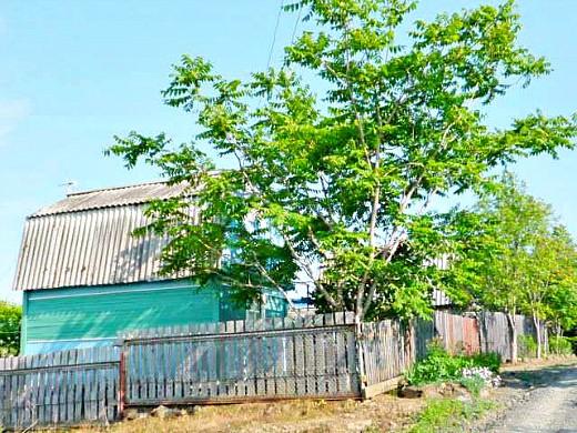 маньчжурский орех на даче