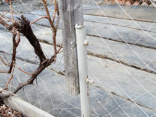 пергола садовая для винограда 1-3