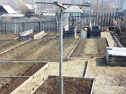 спаржевая фасоль, выращивание, уход 1-9