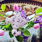 уход и посадка тюльпанов осенью 1-2
