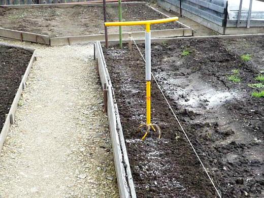 выращивание кукурузы на даче 1-3