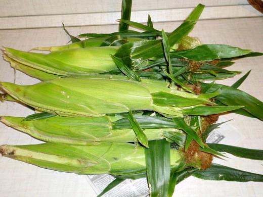 выращивание кукурузы на даче 1-7