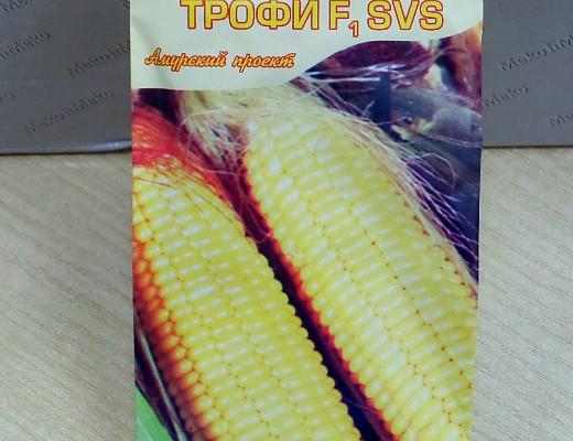 выращивание кукурузы на даче 1-9