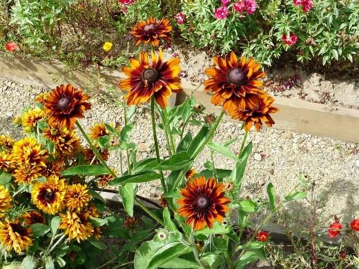Красивые дачные цветы, фото