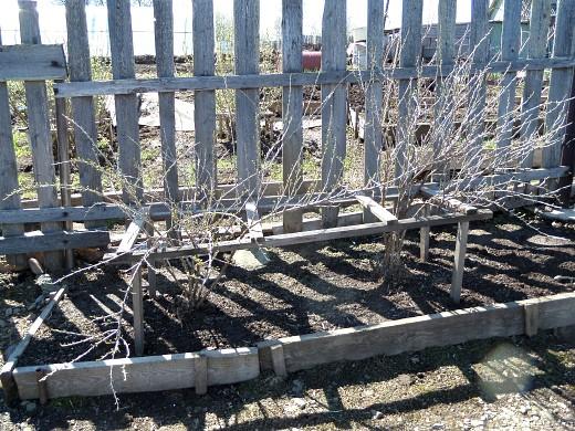 посадка и выращивание крыжовника 1-3
