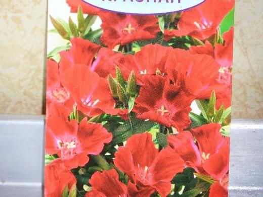 цветок годеция - семена, красная