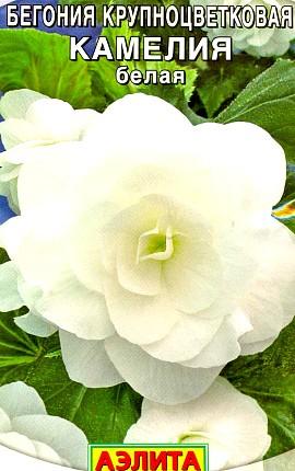 семена бегония крупноцветковая сорт камелия, белая