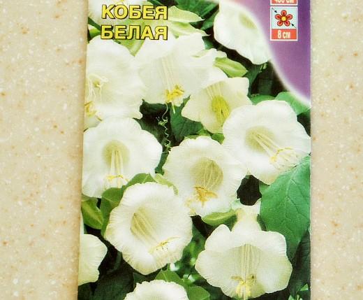 семена кобея сорт белая