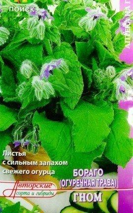 огуречная трава бораго, посадка - семена сорт гном