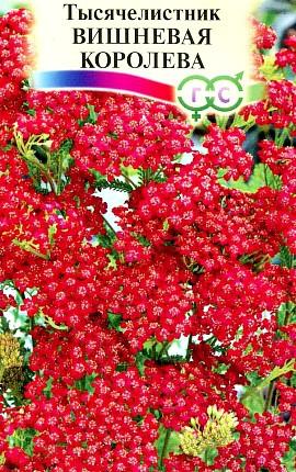 семена тысячелистник сорт вишневая королева