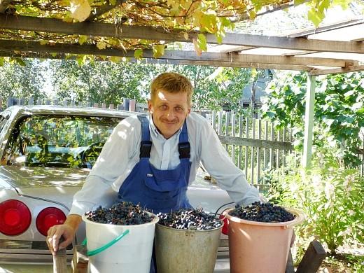 амурский виноград дикий, посадка и уход 1-1