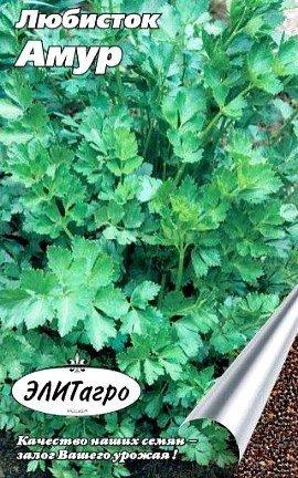 любисток выращивание, применение - сорт амур