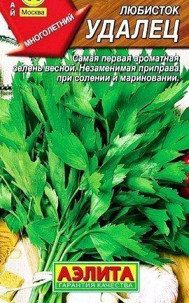 любисток выращивание, применение - сорт удалец