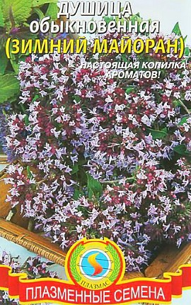 семена душица обыкновенная сорт зимний майоран