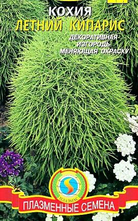 цветы кохия семена сорт кипарис летний