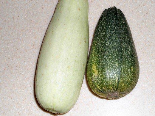 посадка, выращивание кабачков - разные сорта