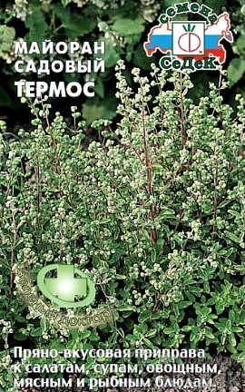 садовый майоран, выращивание - семена сорт термос