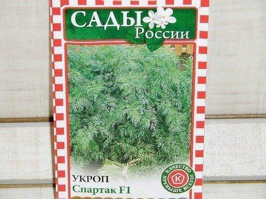 укроп посадка и выращивание - сорт спартак f1
