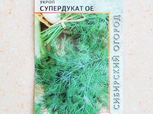 укроп посадка и выращивание - сорт супердукат ое