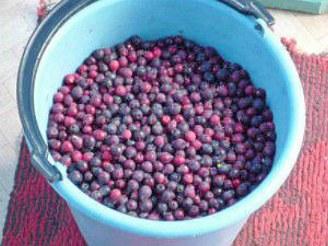 как варить компот из замороженных и свежих ягод 1