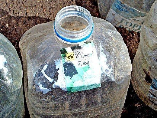 капуста белокочанная выращивание и уход - рассада