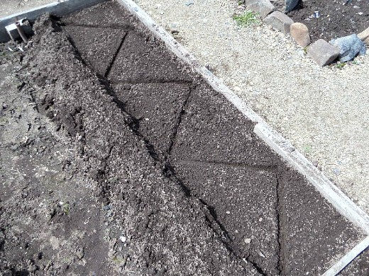 посадка и выращивание картофеля на даче - посадка зигзагом по методу митлайдера