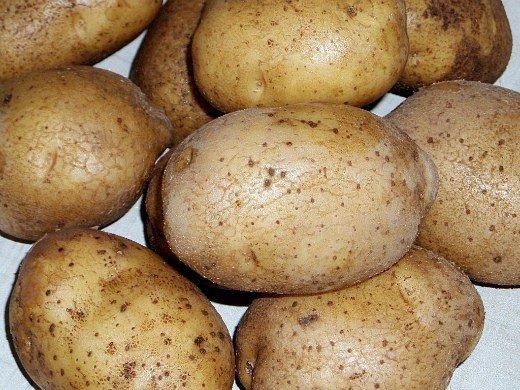 посадка и выращивание картофеля на даче - сорт гранола