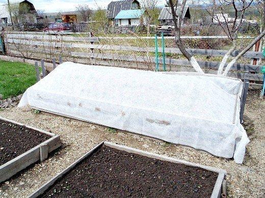 посадка рассады и выращивание баклажанов в парнике - укрываем нетканым материалом