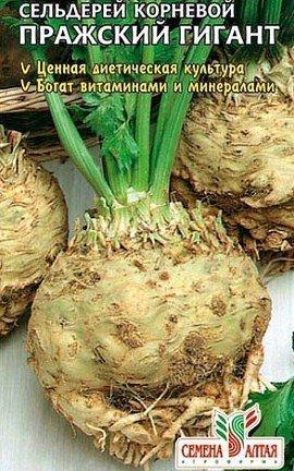 сельдерей корневой выращивание и уход - семена сорт пражский гигант