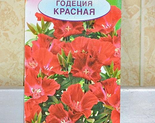 цветы годеция, выращивание - семена годеция красная