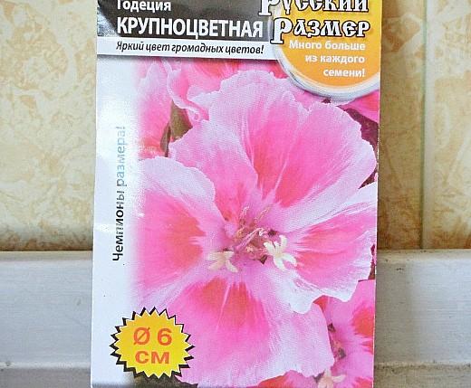 цветы годеция, выращивание - семена годеция крупноцветная