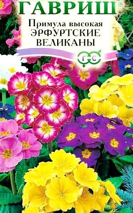 примула высокая садовая многолетняя, семена сорт эрфуртские великаны