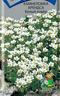 цветок камнеломка, посадка и уход, семена камнеломка арендса сорт белый ковер