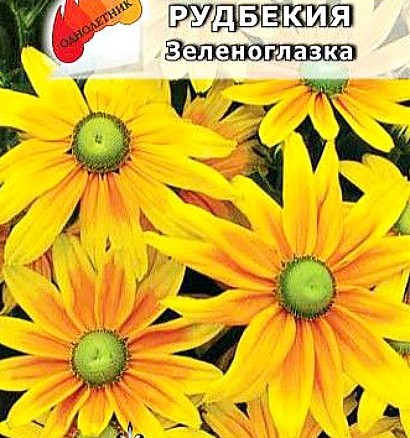 цветок рудбекия многолетняя, семена сорт зеленоглазка