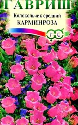 цветы колокольчики - посадка и уход, семена колокольчик средний сорт карминроза