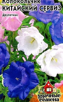 цветы колокольчики - посадка и уход, семена сорт китайский сервиз