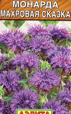 цветок монарда - посадка и уход, семена сорт махровая сказка