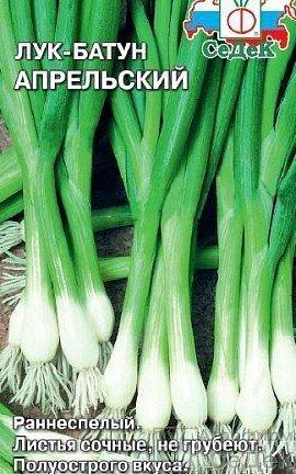 лук-батун, выращивание из семян, сорт апрельский