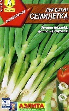 лук-батун, выращивание из семян, сорт семилетка
