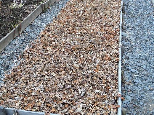 посадка и выращивание клубники - весной до уборки