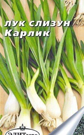 лук-слизун, выращивание из семян - сорт карлик