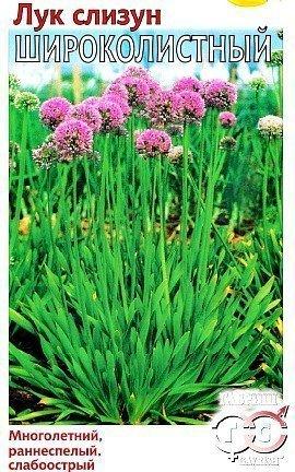 лук-слизун, выращивание из семян - сорт широколистный