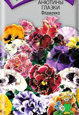 цветы анютины глазки, выращивание - семенаи сорт фламенко
