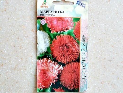 цветы маргаритки, выращивание 1-3