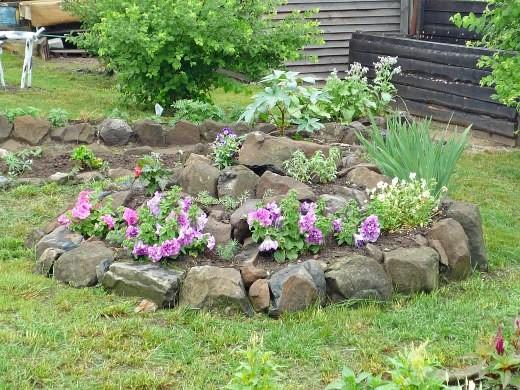 петуния, выращивание из семян в домашних условиях - посадка на альпийской горке