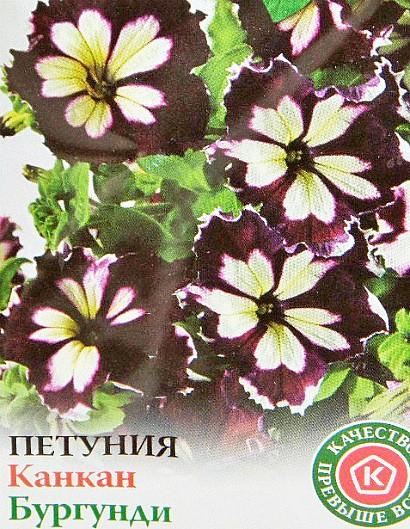 петуния, выращивание из семян в домашних условиях - сорт канкан бургунди